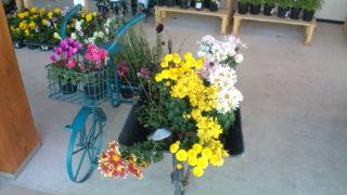お花のディスプレー