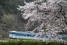 鉄道写真にチャレンジ!-115系と桜 小淵沢