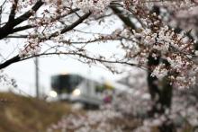 鉄道写真にチャレンジ!-E257系と桜 小淵沢