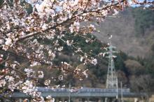 鉄道写真にチャレンジ!-313系と桜 みどり湖
