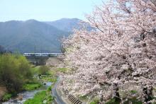 鉄道写真にチャレンジ!-E257系と桜 みどり湖