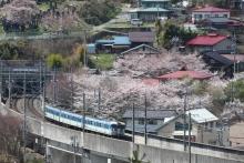 鉄道写真にチャレンジ!-115系と桜 岡谷