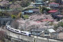 鉄道写真にチャレンジ!-E351系と桜 岡谷