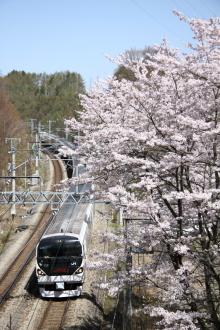 鉄道写真にチャレンジ!-E257系と桜 富士見