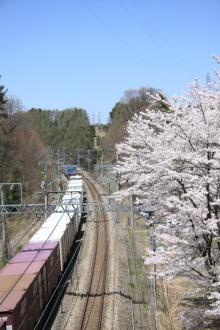鉄道写真にチャレンジ!-EH200形と桜 富士見