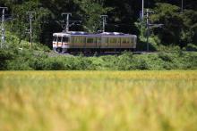 鉄道写真にチャレンジ!-554M 313系 編成不明