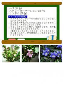 9/10花の解説