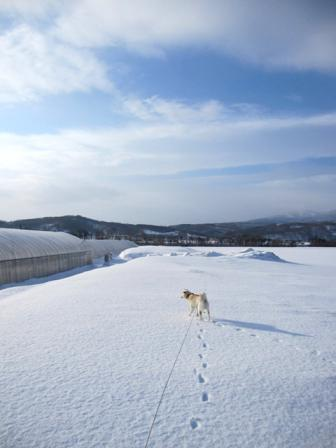 堅雪の上にふわふわ雪