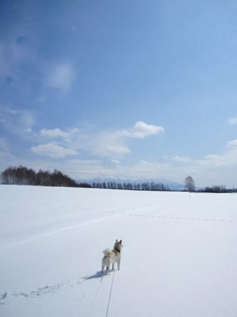 かろうじて取付道路が除雪されてたとこ発見