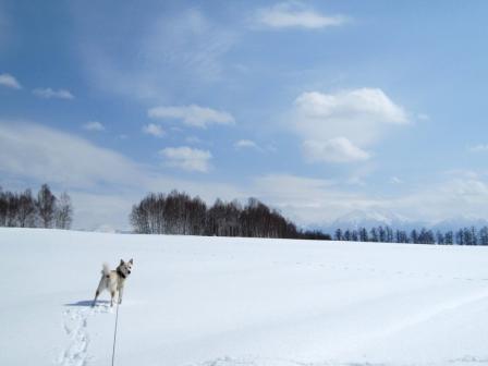 十勝岳連峰がかすかに・・・見える?