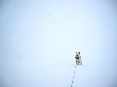 イヌのところが境目