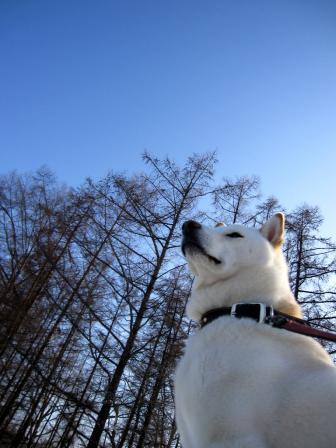 青空に偉そげアングルのイヌ