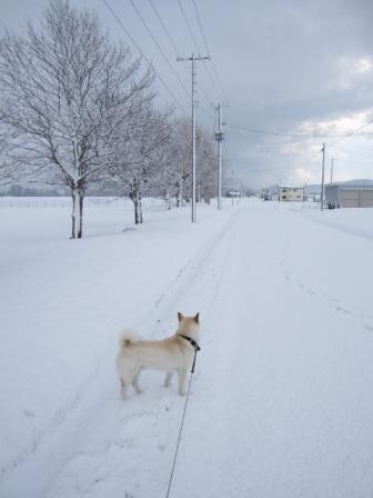 明日の天気予報は雪なんだよね・・・