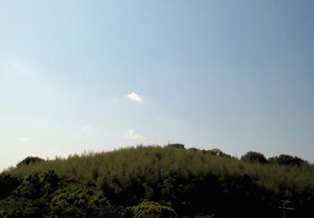 午後から曇ってきたかな