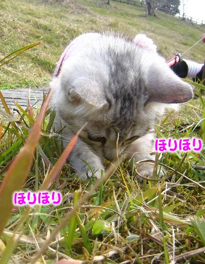 IMG_2680 - コピー