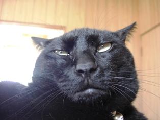 黒猫提灯組 009じじ