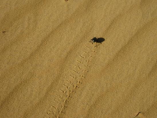 エジプト旅行:アスワンの砂 スカラベ