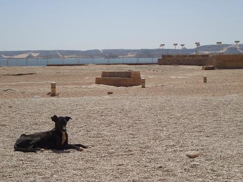 エジプト旅行:アブシンベル神殿 犬
