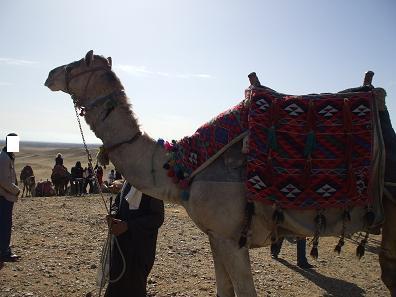 エジプト旅行:ギザの3大ピラミッド ラクダ