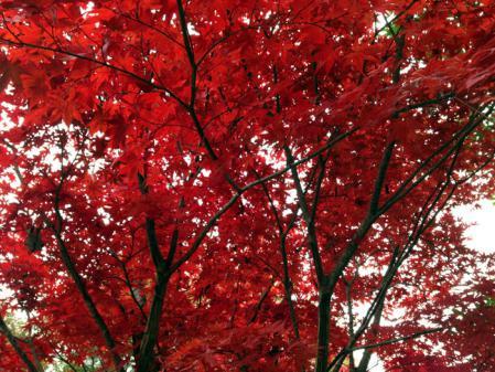 2012-11-10_15-05-39_000.jpg