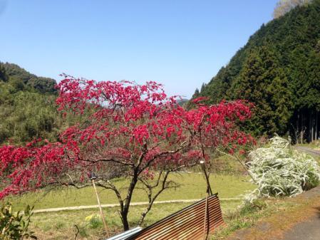 写真-2013-04-13-12-31-02