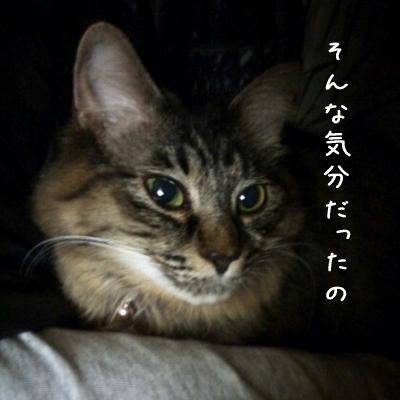 20121113_2.jpg