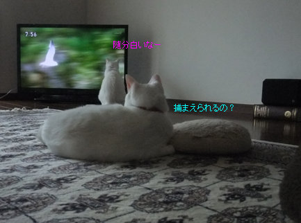0929-03_20120929141326.jpg