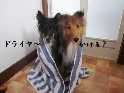 20121214ちゃこお風呂