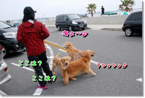DSC_0001_20120501000618.jpg