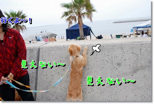 DSC_0002_20120501000617.jpg