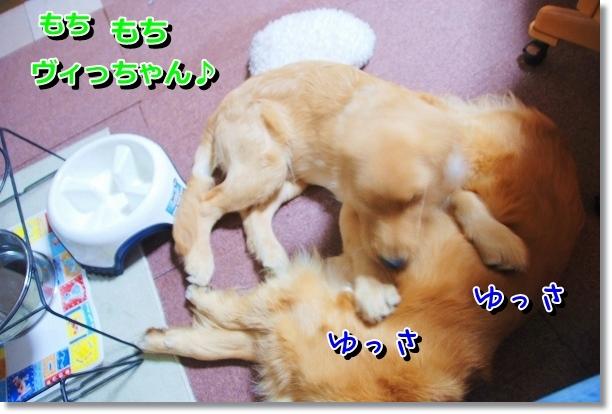 DSC_0002_20120511212450.jpg