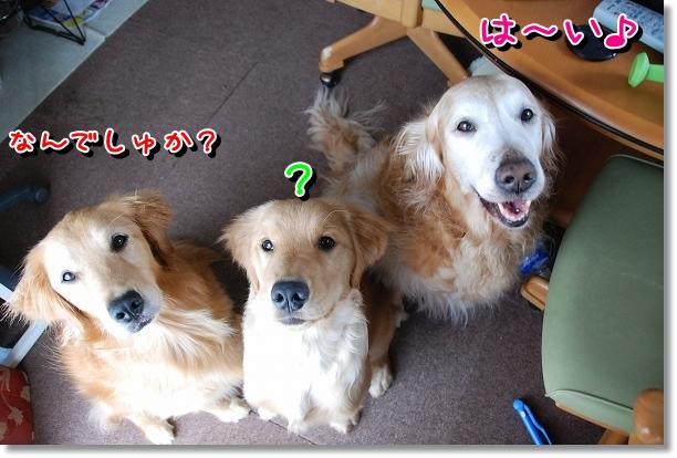 DSC_0002_20120525161116.jpg