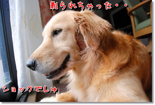 DSC_0004_20120503142435.jpg