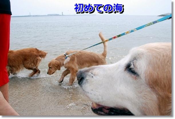DSC_0006_20120501000616.jpg