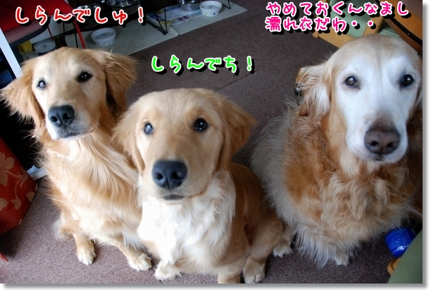 DSC_0006_20120525161113.jpg