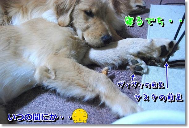 DSC_0007_20120511212446.jpg