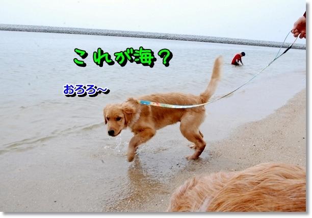 DSC_0008_20120501000615.jpg