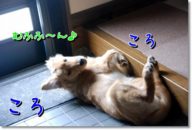 DSC_0010_20120525161211.jpg
