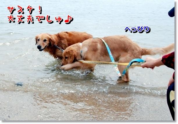 DSC_0011_20120501000614.jpg