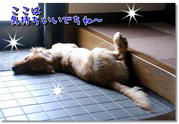 DSC_0012_20120525161209.jpg