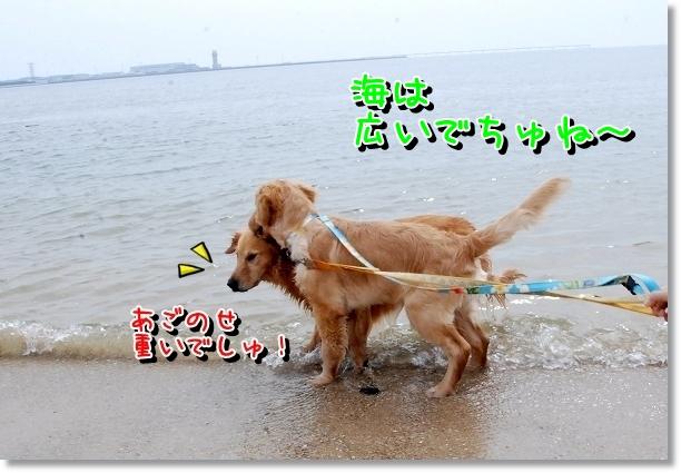 DSC_0013_20120501000706.jpg