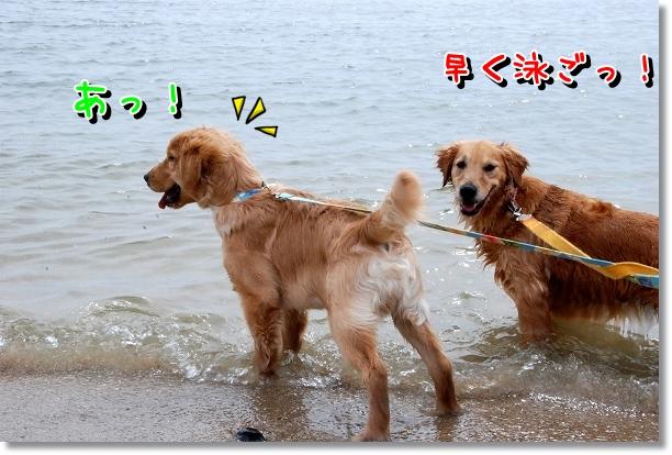 DSC_0015_20120501000705.jpg