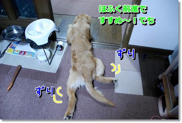 DSC_0015_20120527002137.jpg