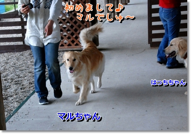 DSC_0018_20120502024043.jpg