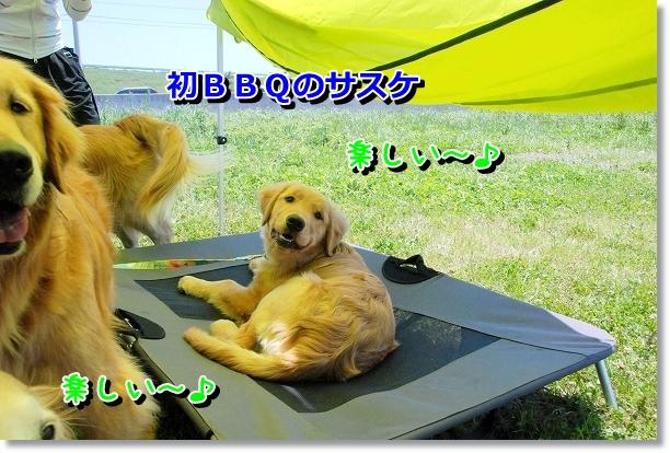 DSC_0018_20120507021411.jpg