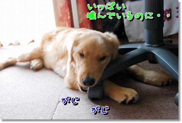 DSC_0021_20120503142510.jpg