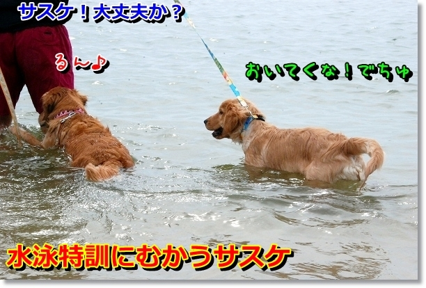 DSC_0023_20120501000702.jpg