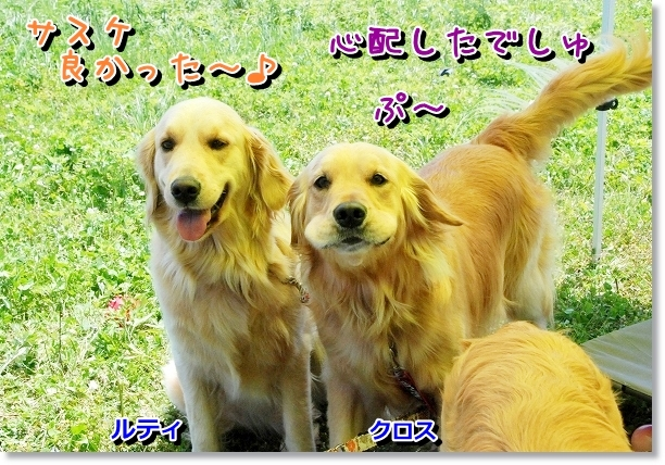 DSC_0023_20120507021410.jpg