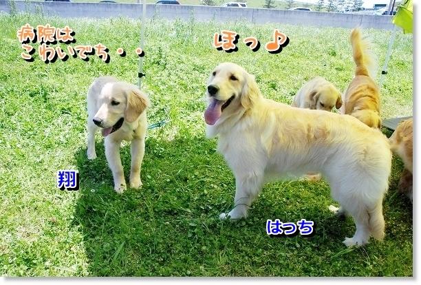 DSC_0026_20120507021409.jpg