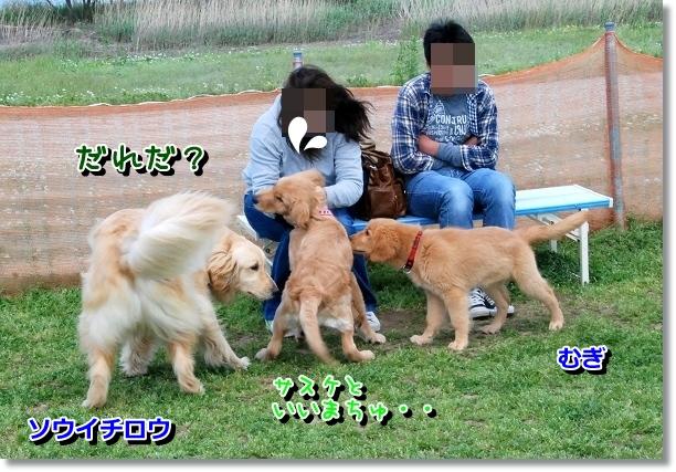 DSC_0034_20120505011520.jpg